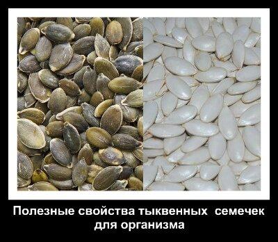 очищенные семена тыквы 1