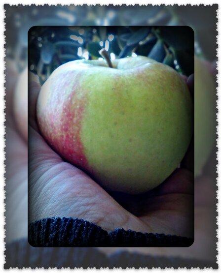 зеленые яблоки при грудном вскармливании